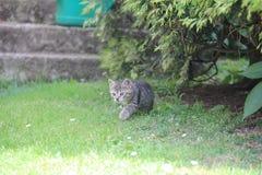 Котенок Tabby на траве стоковые фото