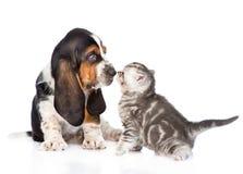 Котенок tabby обнюхивать щенка гончей выхода пластов Изолировано на белизне Стоковые Фото