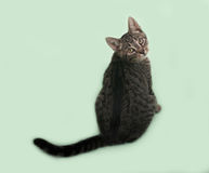 Котенок Tabby сидя на зеленом цвете стоковое фото