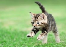Котенок Tabby скача на траву стоковая фотография