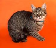 Котенок Tabby с желтым цветом наблюдает в синем воротничке лежа на апельсине Стоковые Изображения RF