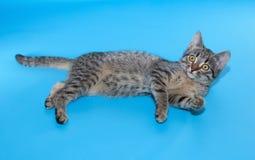 Котенок Tabby с желтым цветом наблюдает лежать на сини Стоковые Изображения