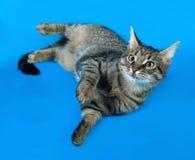 Котенок Tabby с желтым цветом наблюдает лежать на сини Стоковая Фотография