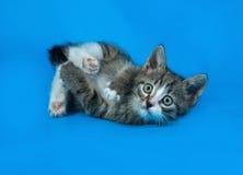Котенок Tabby упал на синь стоковые фотографии rf