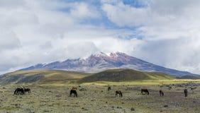 Котопакси эквадор Стоковая Фотография