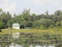 Коттедж и тележка в природном парке Флориды Стоковые Фото