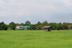 Коттедж окружен зелеными полями и деревом риса стоковое изображение rf