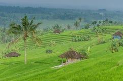 Коттедж в полях риса Стоковые Изображения RF