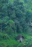 Коттедж в пуще Стоковое Изображение