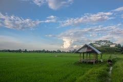 Коттедж в рисовых полях Стоковое Изображение RF