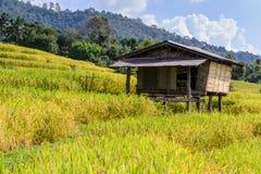 Коттедж в середине поля риса стоковые изображения