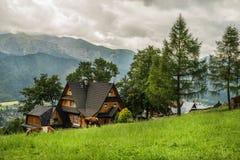 Коттедж и коровы деревни на поле зеленой травы, Zakopane, Польше Стоковые Фотографии RF