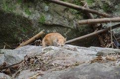 коты бездомные Стоковая Фотография RF