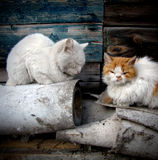 коты бездомные Стоковые Фото