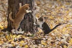 Коты в парке Стоковая Фотография