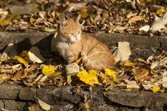 Коты в парке Стоковое Изображение