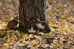 Коты в парке Стоковые Изображения RF