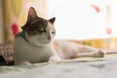 Коты в Таиланде Стоковое Фото