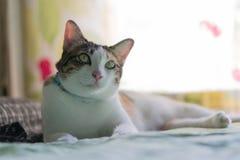 Коты в Таиланде Стоковое Изображение