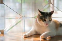 Коты в Таиланде Стоковая Фотография
