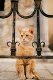 Коты в Черногории Стоковые Фото