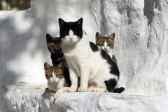 коты Греция стоковые фотографии rf