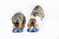 Коты есть на шаре еды стоковые изображения