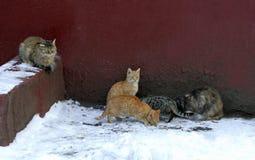 Коты едят Стоковое Фото
