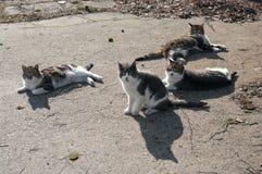 Коты ждать старое ` s рыболовов линяют, Baltiysk, Россия Стоковая Фотография