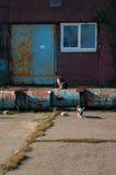 Коты ждать старое ` s рыболовов линяют, Baltiysk, Россия Стоковые Фото