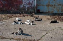 Коты ждать старое ` s рыболовов линяют, Baltiysk, Россия Стоковое Изображение RF