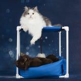 Коты играют на кресле стоковые фото