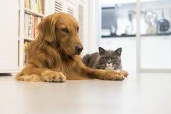 Коты и собаки стоковое изображение rf