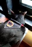 Коты кафа - красивый парень Стоковое фото RF