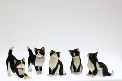 Коты киски стоковые изображения