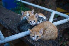 Коты киски Стоковое Изображение