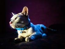 Коты королевски и собаки верноподданически стоковое фото rf