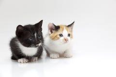 коты малые 2 Стоковые Фото