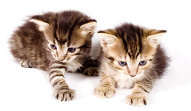 коты милые Стоковые Фотографии RF