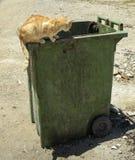 Коты на и в контейнере отброса Стоковые Фотографии RF