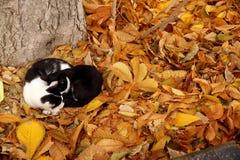 Коты на ковре от листьев осени Стоковые Изображения