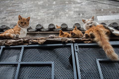 Коты на крыше Стоковое фото RF