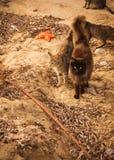Коты на пляже, Mikonos, Греции Стоковая Фотография RF
