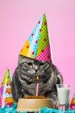 Коты дня рождения Стоковые Фото