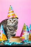 Коты дня рождения Стоковое Изображение