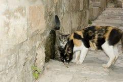 коты переулка Стоковые Изображения RF