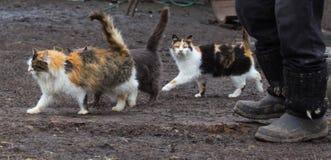 Коты при поднятый кабель бежать вокруг для Стоковое Изображение