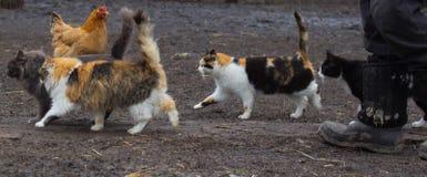 Коты при поднятый кабель бежать вокруг для Стоковое Фото