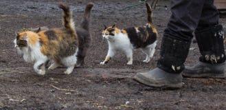 Коты при поднятый кабель бежать вокруг для Стоковая Фотография