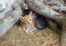 Коты просто красивы стоковые фотографии rf